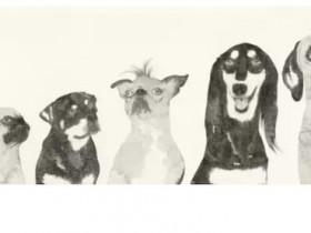 """皮道坚:李军的""""狗托邦""""——凝视的意义"""