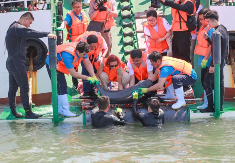 世界海龟日主题宣传活动在蓬莱八仙过海度假区举行